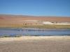 Atacama: Plameňáci