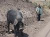 Indián se svým prasátek poblíž vesnice Zumbahua