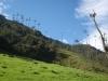 Valle del Cocora - Údolí Cocora