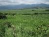 Velká banánová plantáž na jihovýchodě Kostariky