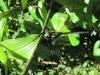 Přírodní rezervace Monteverde