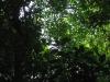 Přírodní rezervace Cabo Blanco (skrytá opička)