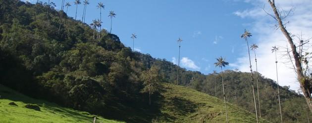 Překvapivá Kolumbie: Salento a údolí Cocora