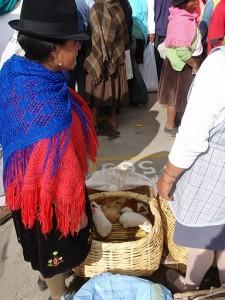 Zvířecí trh v Saquisilí