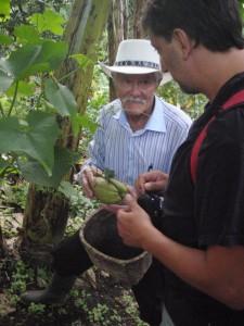 Kávová plantáž